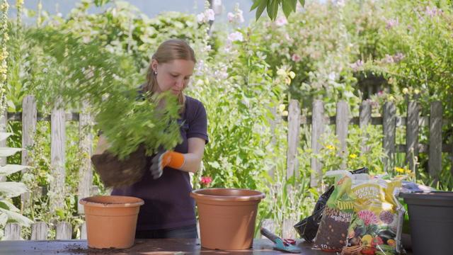 Umpflanzen schnell erklärt