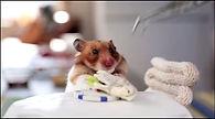 Hamster 2.JPG