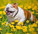 otsphoto-bully-flowers.jpg