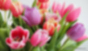 Tulpen,2.jpg