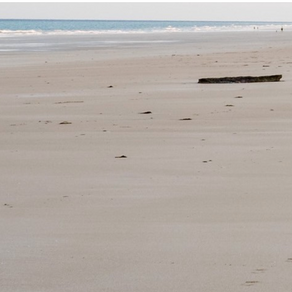 Life's Beachcombers