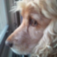 dog walker Belgravia, pet sitter Chelsea SW3, Pet care Chelsea SW3, house sitter Knightsbridge SW1, cat feeder Chelsea SW3, dog walking belgravia, dog walker south kensington, house sitter fulham