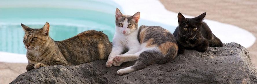 help-feral-cats.jpg