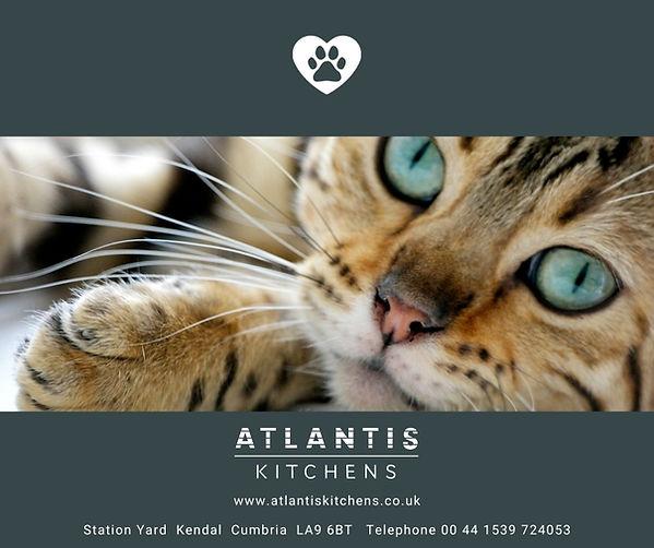 Cat Protection Atlantis.jpg
