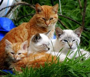 feral-family.jpg