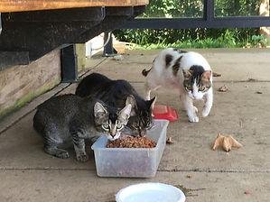 feeding ferals.jpg