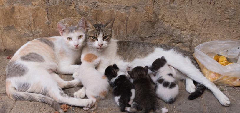 feral family.jpg
