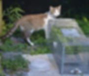 National-Feral-Day-815x480.jpeg