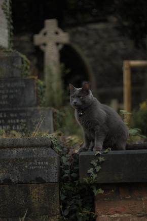 Familiar in Graveyard