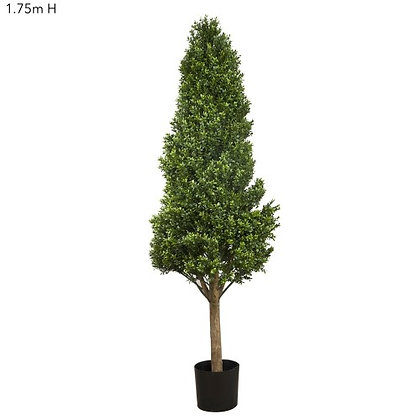 1.75mt Boxwood Tower Tree  DBBTT53420
