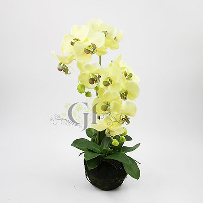 75cm Rugged Soil Orchid GF60318 - Green