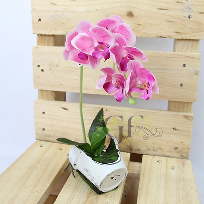 30cm Reveal Potted Orchid GF60323 - Purple