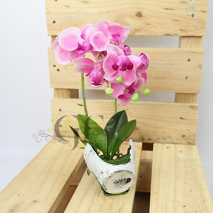 30cm Reveal Potted Orchid GF60322 - Purple