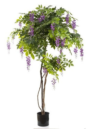 Wisteria 1.8mts Purple