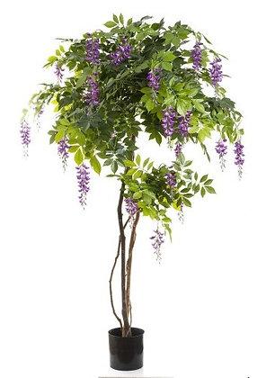 Wisteria 1.8mts Purple