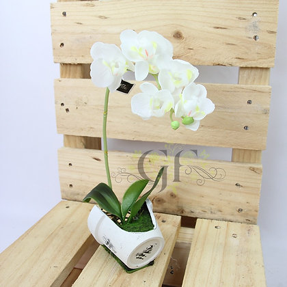 30cm Reveal Potted Orchid GF60323 - White