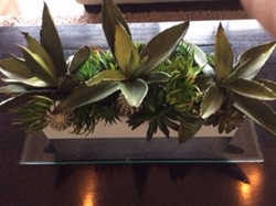 Selection of Agaves and Succulents