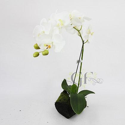 50cm Ruptured Orchid GF60317 - White