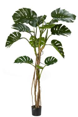Monsteria Plant Vine 100x100x183cm 32