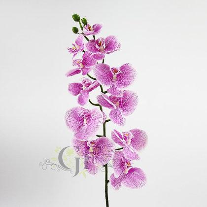 105 Phalaenopsis Orchid GF60388 - Purple