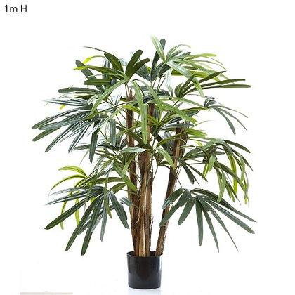 1mt Rhaphis Palm DBRP2236