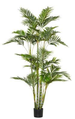 Cane Palm 90x100x180cm 32.453.00