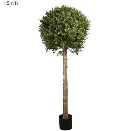 1.5mt Red Day Leaf Ball Tree DBRDL151720
