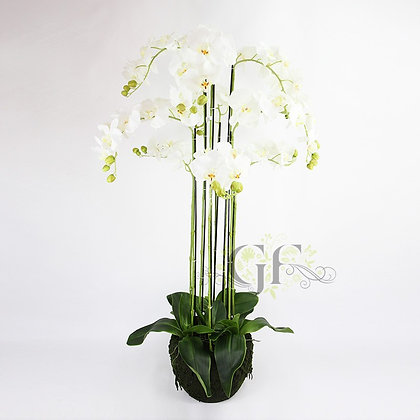 120cm Rugged Soil Orchid GF60314 - White
