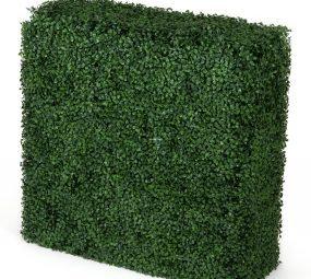 Boxwood Hedge (Dark) 75Wx75Hx25D