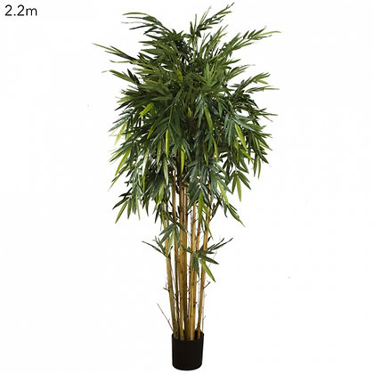 New Bamboo Tree 2.2mts