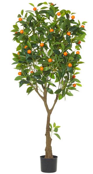 Cumquat Tree 150cm