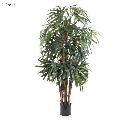 1.2mt Rhaphis Palm Thin Leaf DBRP3444