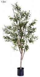 Olive Tree 1.5mts $270.00 each.jpg