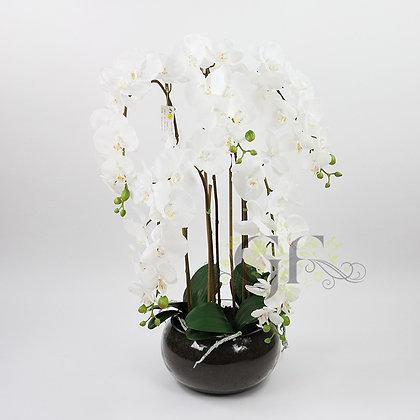 70cm Phalaenopsis Orchid GF20075 - White