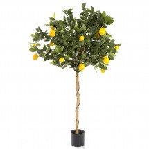 Lemon Tree 1.2mts with natural stem