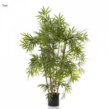Japanese Bamboo Tree 1mt