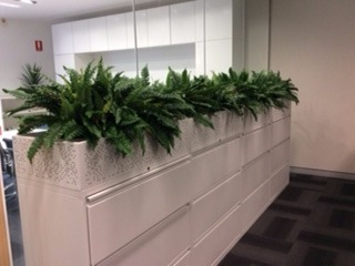 Tambour Unit with Boston Ferns