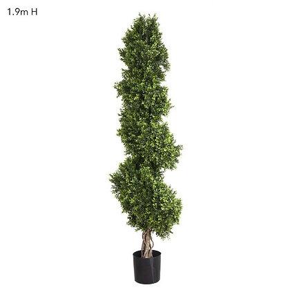 1.9mt Boxwood Spiral Tree DBBS553960