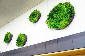 Green Wall Disc
