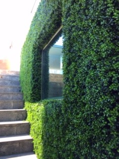 External Boxwood Garden Wall
