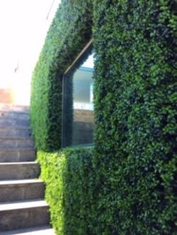 External Boxwood Garden Wall