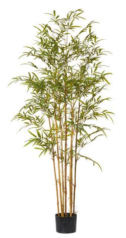 Mini Leaf Bamboo 150cm