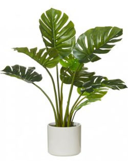 Artificial/faux trees and plants for sale. Bamboo, palms, succulents, green walls, hedges, hanging plants, centrepieces