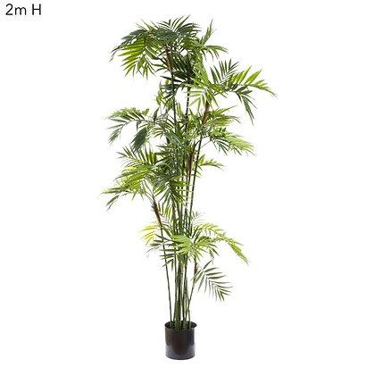 2mt Parlour Palm DBPP61232
