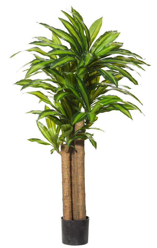 Artificial Plants Hire|Buy
