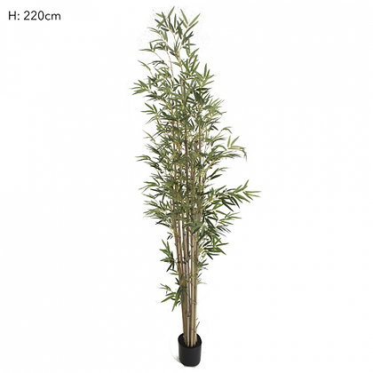 Bamboo Tree Natural Trunk 1598 Leaves  2.2mts