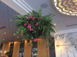 Colourful Hanging Basket with Ferns