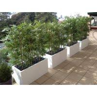 Artificial Bamboo in white troughs