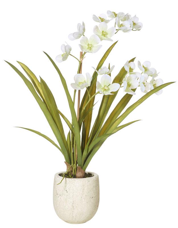 Vanda Orchid in Stone Pot 67cm AU73.528.67