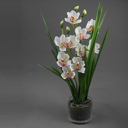 60cm Cymbidium Orchid GF20081 - Cream